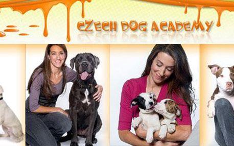 Naučíme Vašeho pejska či štěně základní etiketě psího chování a poradíme s jeho optimálním výcvikem. Svěřte výchovu svého miláčka specialistům z naší psí akademie a budete ohromeni dosaženými výsledky.