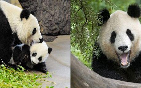 VÍDEŇ PRO DĚTI! Jen 690 Kč za 1-denní výlet věnovaný dětem do nejstarší a jedné z nejkrásnějších ZOO na světě vůbec! Mláďata Pandy velké a slona jsou největšími lákadly, které můžete vidět na vlastní oči!