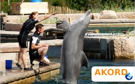 Tuhle show musíte vidět! Delfíni a lachtani v Norimberku vás pobaví.