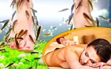 Pedikúra s rybkami Garra Rufa i egyptská masáž