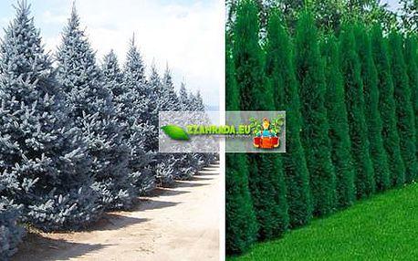 Zahradní stromky zerav nebo smrk pichlavý