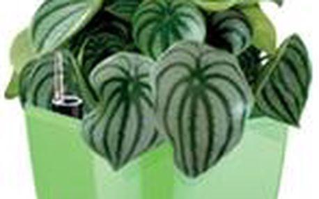 Samozavlažovací květináč SENSE, zelená