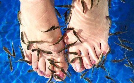 Příjemná koupel nohou s rybkami Garra Rufa