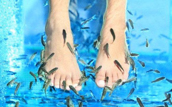 30 minut péče rybích doktorů pro jednu nebo dvě osoby. Užijte si antibakteriální peeling a mikromasáž nohou, procedura má také pozitivní účinek při léčbě kožních problémů.4