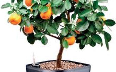 Samozavlažovací květináč SENSE, šedá