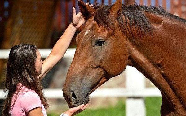 Tiphorse