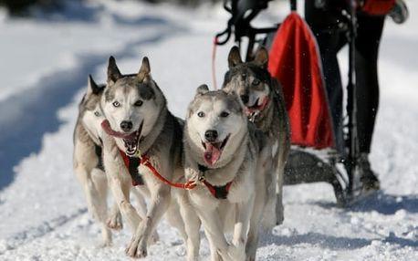 Mushing - jízda se psím spřežením v Olomouckém kraji