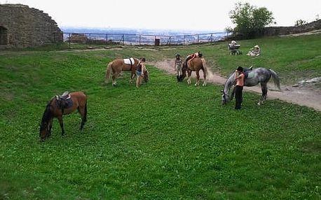 Stáje Ráby: 30min. nebo 60min. jízda na koni pro 1 osobu, možnost doprovodu s vodičem
