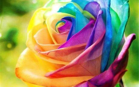 Semínka duhových rostlin - mix růže a chryzantéma
