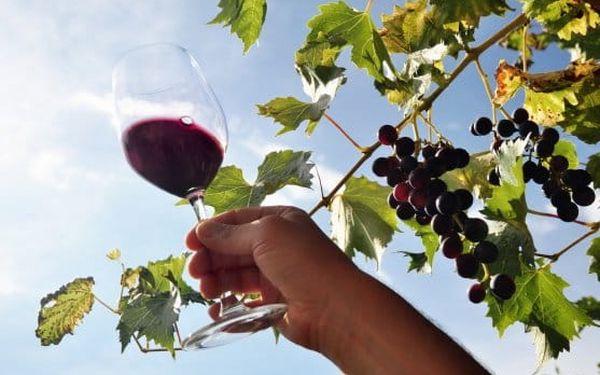 3–4denní pobyt s neomezenou konzumací vína v penzionu Pálava na jihu Moravy pro 25