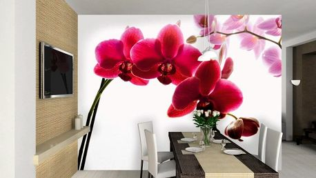1Wall fototapeta Orchidej 315x232 cm