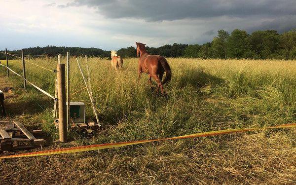 Farmářem na jeden den aneb den u koní2