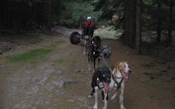 Mushing - jízda se psím spřežením5