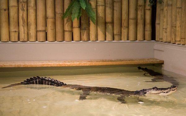 Krokodýlí Zoo Praha