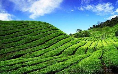 Masáž a zábal ze zeleného čaje