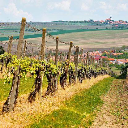 Vinné sklepy u Lednice: polopenze i košt vína