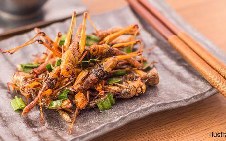 Degustace hmyzích specialit s šéfkuchařem