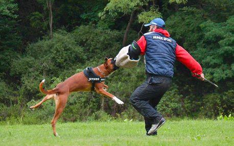 Úvodní výcviková hodina v psí škole DogUniversal