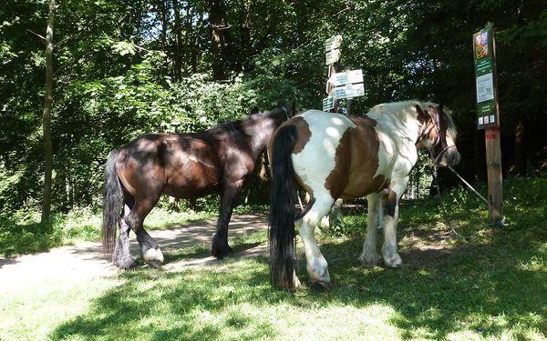 Vyjížďka na koni ve dvou2