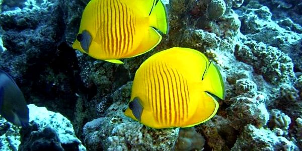 Potápěčšký kurz pro pokročilé: Advanced Open Water Diver4