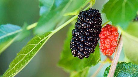 Velká sada ovocných keřů pro vaši zahradu