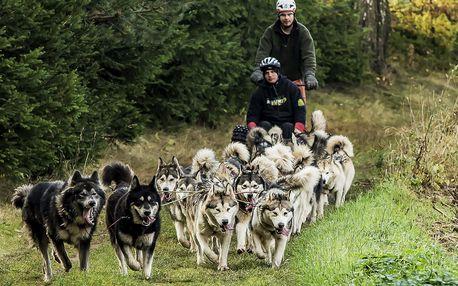Jízda se psím spřežením v Jestřebích horách