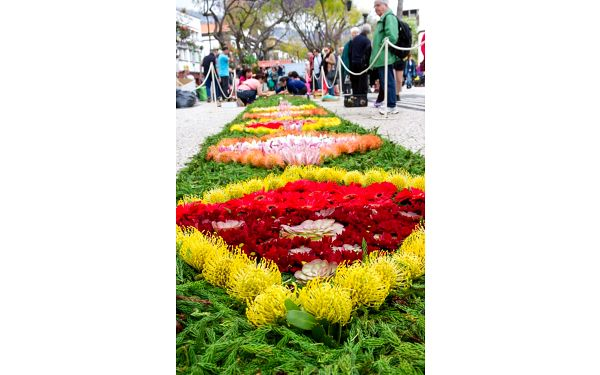 Květinové slavnosti na Madeiře, letecky, snídaně v ceně3