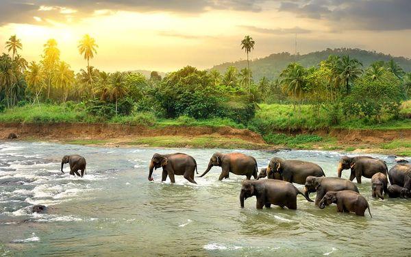 Srí Lanka - Cesta za Perlou Indického oceánu, letecky, polopenze3