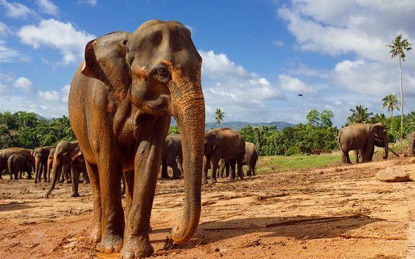 Srí Lanka - Cesta za Perlou Indického oceánu, letecky, polopenze5