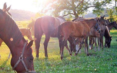Zážitkový pobyt v areálu hřebčína u města Trenčín se snídaní nebo polopenzí i včetně projížďky na koni nebo v kočáře