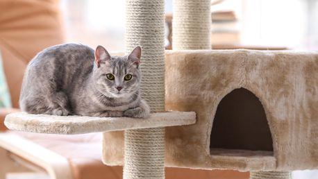 Škrabadla a šplhací stromy pro kočičí kamarády