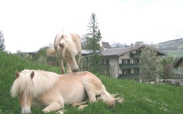 HAFLINGERHOF - Golling, Salzbursko, vlastní doprava, all inclusive5