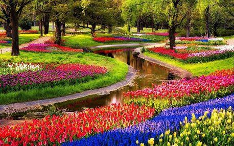Rozkvetlý Keukenhof a Amsterdam, tulipány, farma sýrů a dřeváků, autobusem