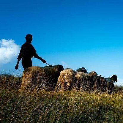 Pastevcem na den