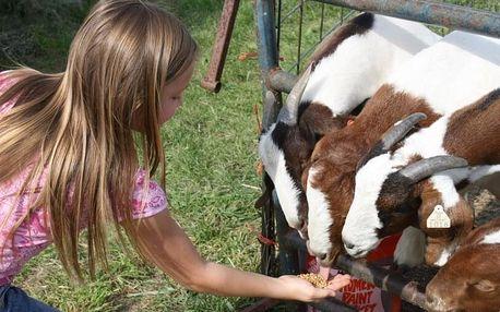 Na farmu za zvířaty