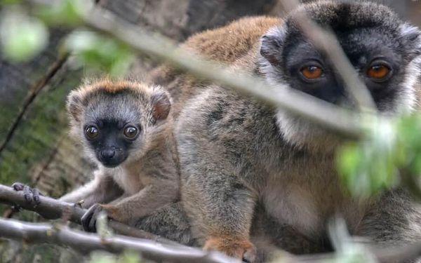 Den ošetřovatelem v Zooparku   obec Zájezd   duben – říjen   5 hodin2
