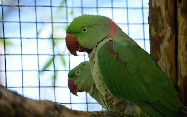 Den ošetřovatelem v Zooparku   obec Zájezd   duben – říjen   5 hodin3