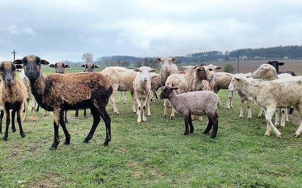 Pastevcem na den   Počaply u Březnice   květen - říjen   cca 12 hodin, záleží na času vašeho příjezdu2