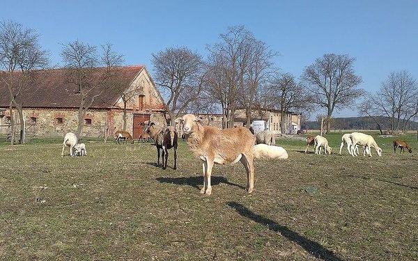 Pastevcem na den   Počaply u Březnice   květen - říjen   cca 12 hodin, záleží na času vašeho příjezdu3