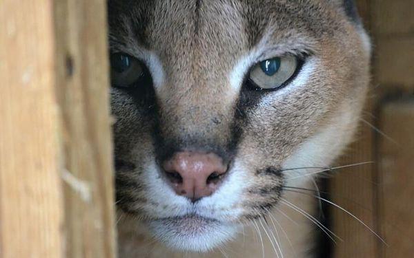 Den ošetřovatelem v Zooparku   obec Zájezd   duben – říjen   5 hodin4