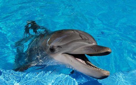 Norimberk a delfíni v místní ZOO, Bavorsko