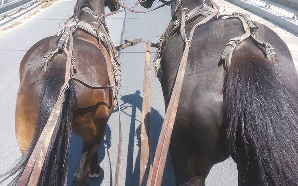 Vyjížďka na koni v Moravském krasu či jízda kočárem lokalitou dle výběru3