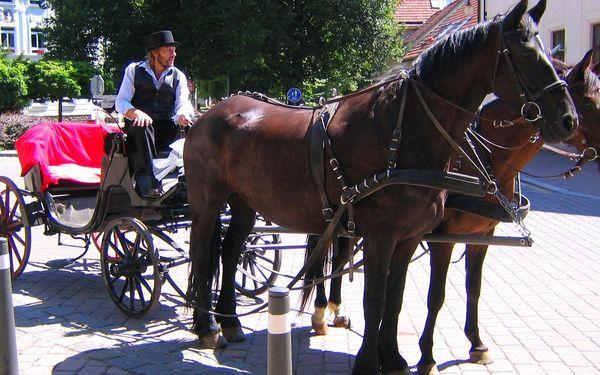 Vyjížďka na koni v Moravském krasu či jízda kočárem lokalitou dle výběru4
