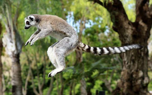 Madagaskar - Osmý kontinent světa, letecky, snídaně v ceně2