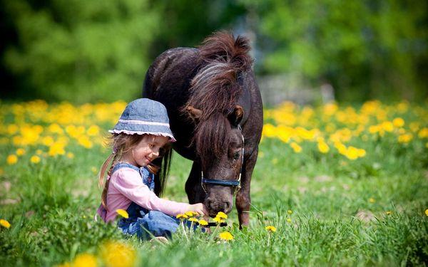 Koně v Troubsku