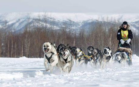 Denní vyjížďka se psím spřežením Javořickou divočinou
