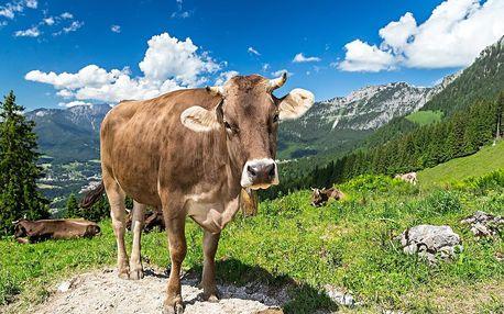 Dovolená mezi švýcarskými Alpami a Bodamským jezerem v hotelu se 100% doporučením - dlouhá platnost poukazu