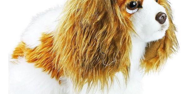 Rappa Plyšový pes King Charles španěl, 25 cm2