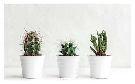 Obraz na plátně Kaktusy Texas, 60 x 40 cm