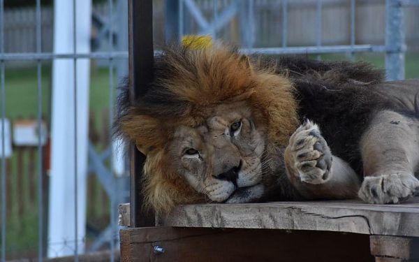 Nocování v ZOO Tábor mezi exotickými zvířaty2